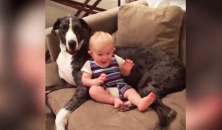 baby and dog couch potatoes