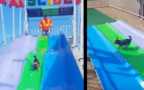 dog loves wavy slide