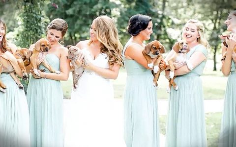 bridesmaids carry rescue puppies instead of bouquets