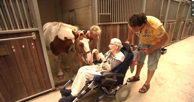 horse lover 1 parkinson's final wish