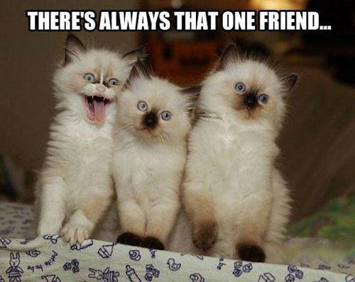 3-cats-theres-always-that-one-friend