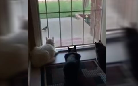 3 cats watch bird until dog surprises them
