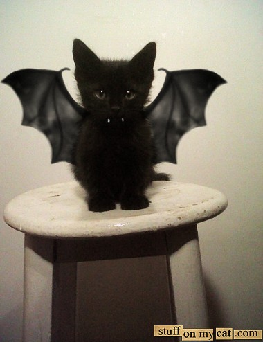 bat kitten _ Animals Who Are Way Better At Halloween Than You Are _ everything inspirational