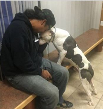 Detroit Youth And Dog Rescue