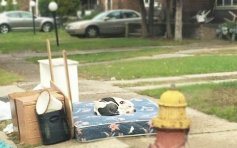 abandoned dog waits a month after family moved away