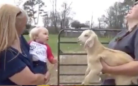 Baby Girl Mimics Goat