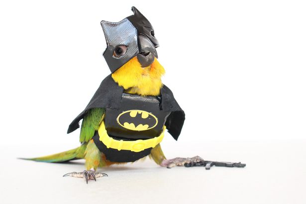 batman-bird _ Animals Who Are Way Better At Halloween Than You Are _ everything inspirational