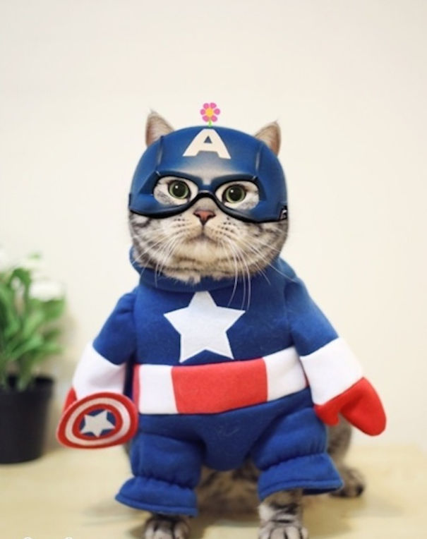 captain-america-cat _ Animals Who Are Way Better At Halloween Than You Are _ everything inspirational