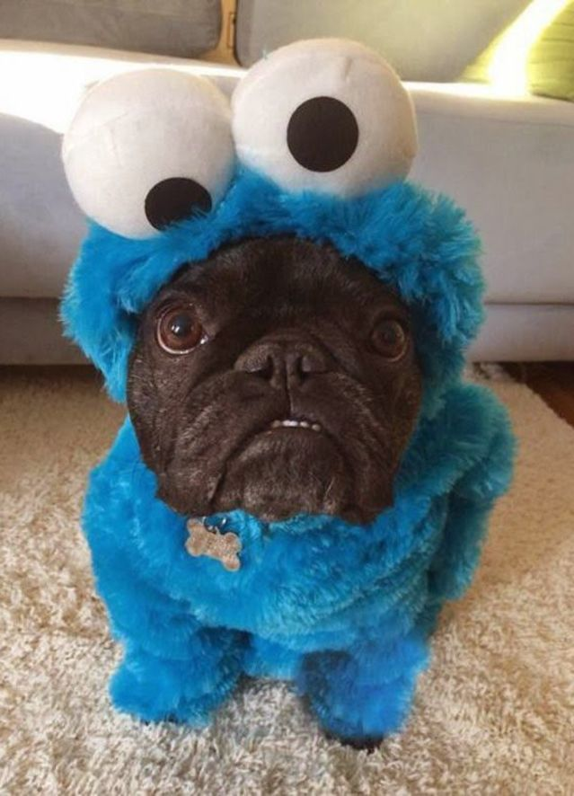cookie monster_Animals Who Are Way Better At Halloween Than You Are _ everything inspirational