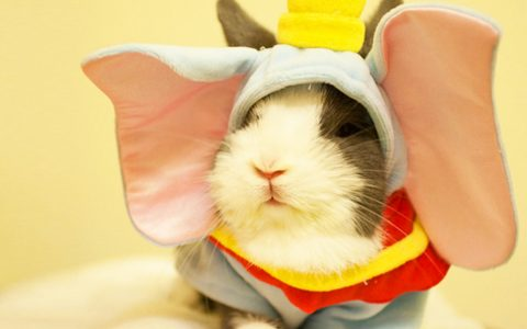 Animals Who Are Way Better At Halloween Than You Are _ everything inspirational