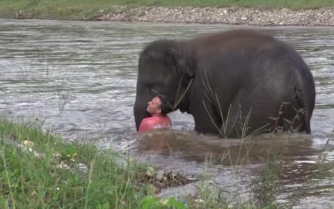 elephant rescue viral video