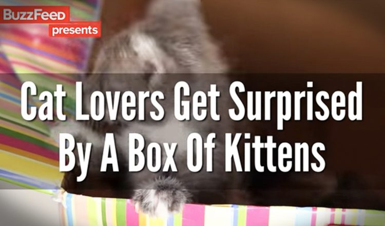 cat lovers get box of kittens