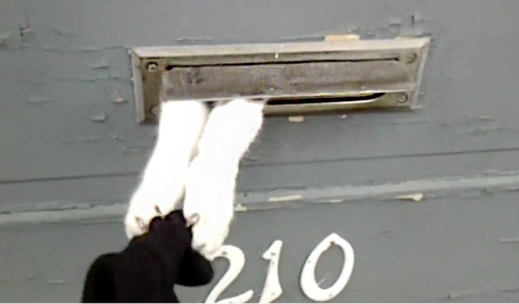 funny cat steals mail - takes mailman glove