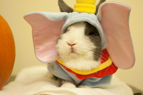 hamster-dumbo _ Animals Who Are Way Better At Halloween Than You Are _ everything inspirational