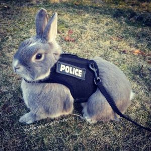 police-bunny _ Animals Who Are Way Better At Halloween Than You Are _ everything inspirational