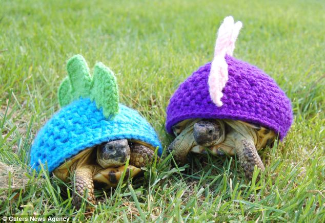 turtle-dinosaurs _ Animals Who Are Way Better At Halloween Than You Are _ everything inspirational