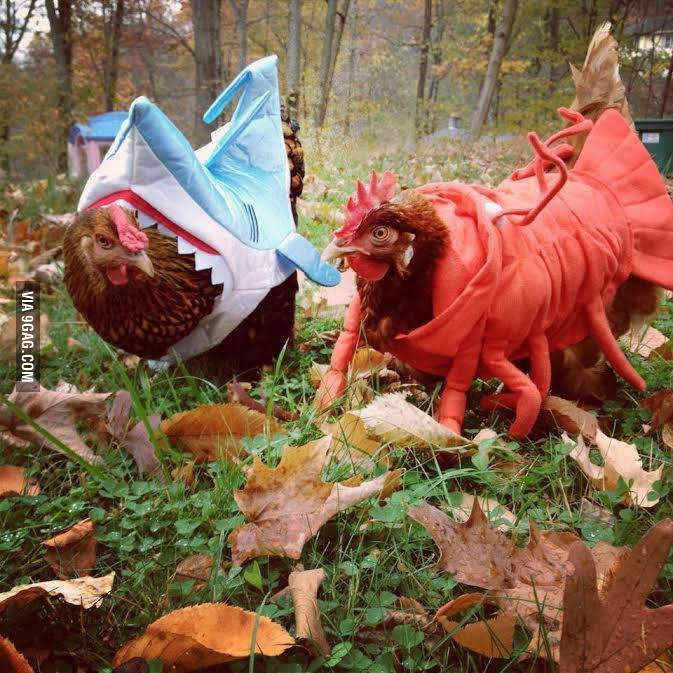 under-the-sea-chickens _ Animals Who Are Way Better At Halloween Than You Are _ everything inspirational