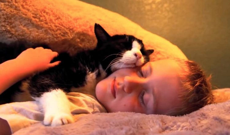 20-year-old Cat Dexter Adopted - Family Says Farewell - Rainbow Bridge
