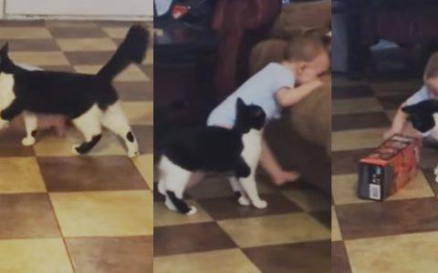 cat follows baby