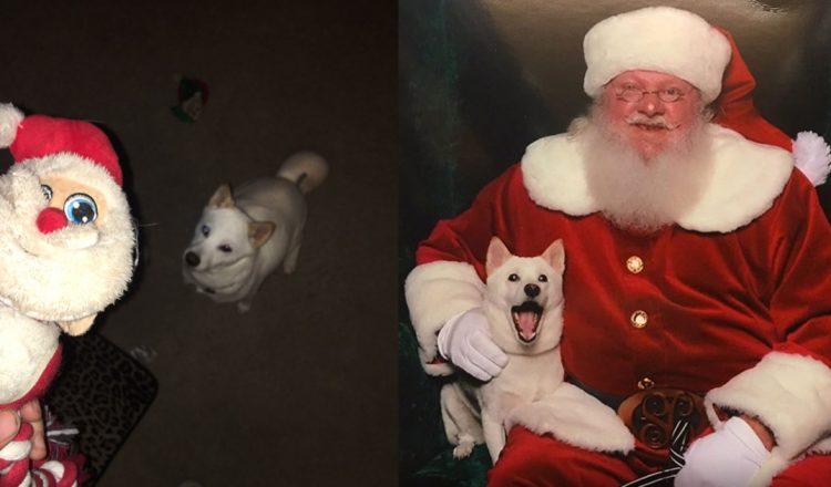 Dog meets santa toy in real life