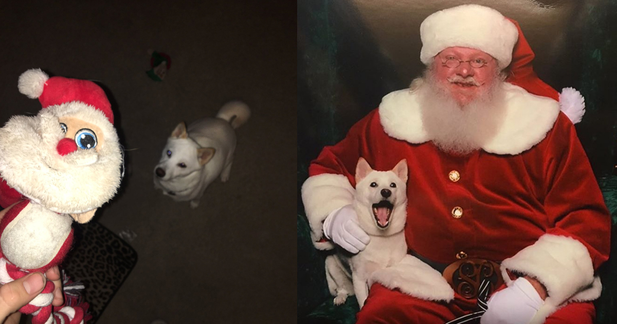 Dog Meets Santa Toy In Real Life Everythinginspirational