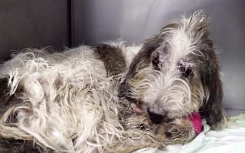 dog thrown from car recovery