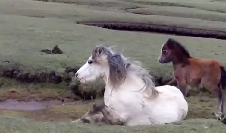 pony and foal rescued