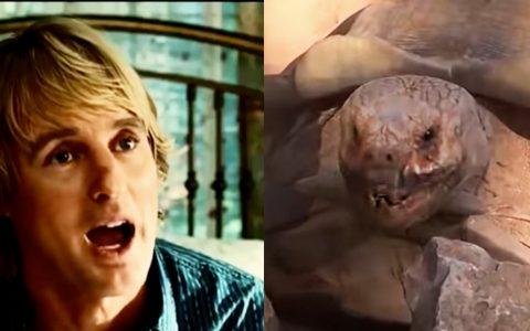 tortoise impersonates owen wilson