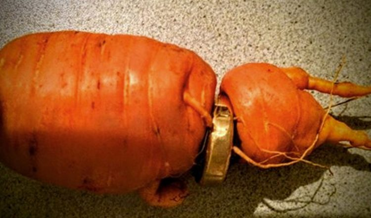 wedding band in a carrot ring Germany