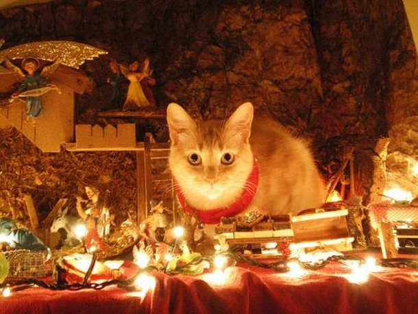 cats in nativity scene