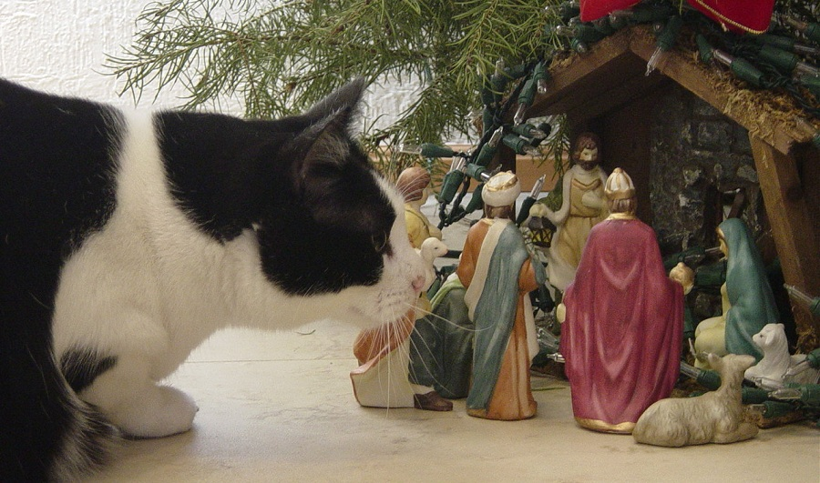 christmas lights richmond virginia