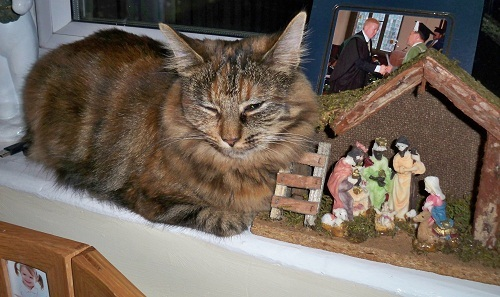 cat in nativity scene