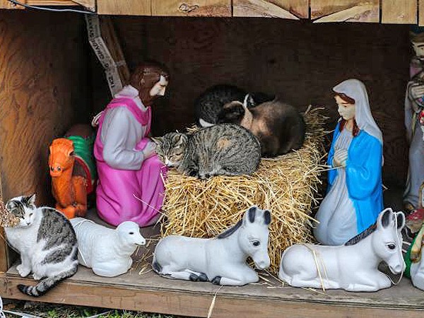 feral cats in nativity scene