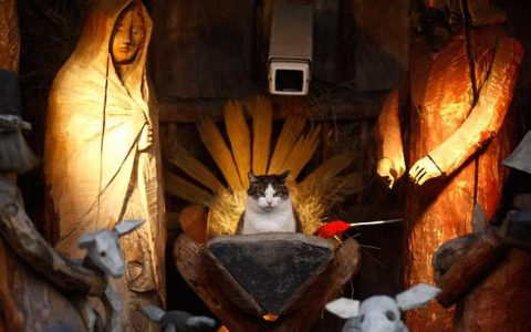 cats in nativity scenes