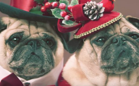 winter wonderland - Christmas pugs She & Him