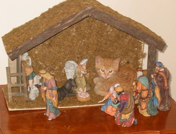 Cats In Nativity Scenes Cats Invade Christmas Hilariously
