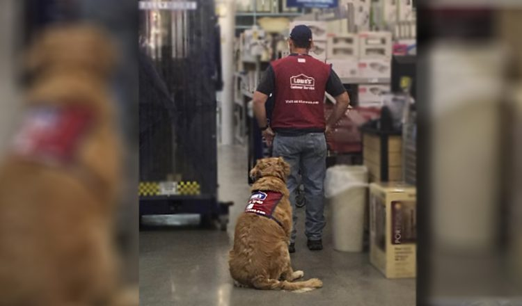lowe's hired dog and veteran viral photo facebook
