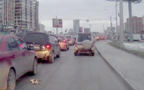 man rescues kitten from traffic