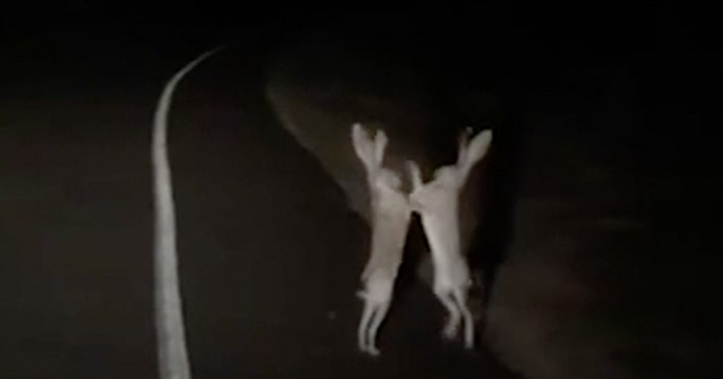 b93e0b80e Every Bunny Was Kung Fu Fighting - Funny Viral Video