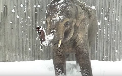 animals enjoy snow day at oregon zoo