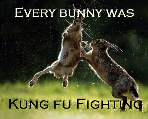every bunny was kung fu fighting meme