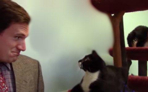 parody commercial furkids pet adoption animal shelter