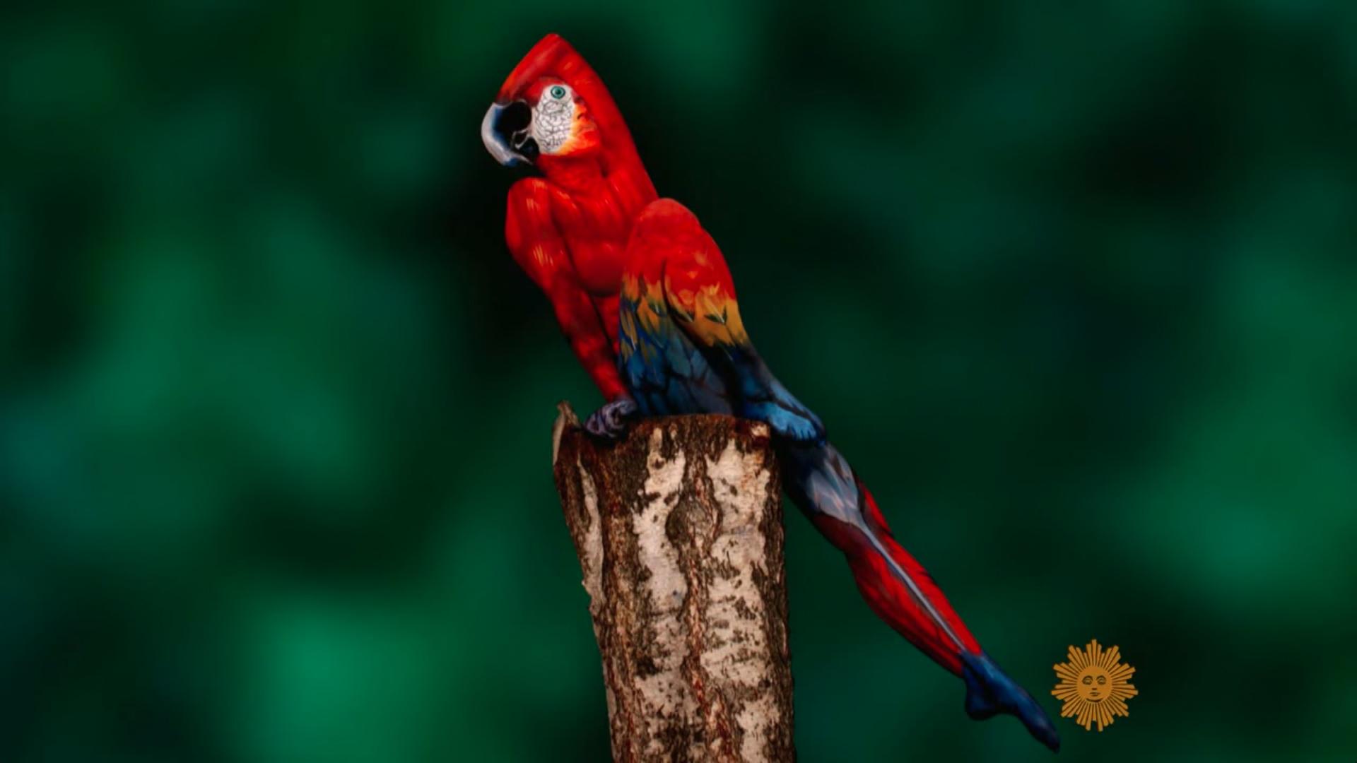 body paint artist Johannes Stötter - Stotter - parrot