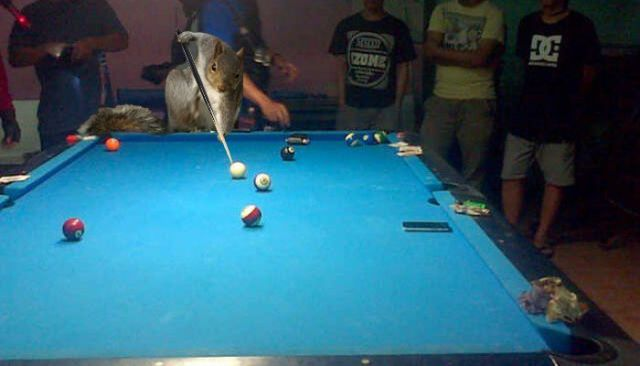 Squirrel's Super Hero Pose _ Photoshop _ Photos _ pool table _ everythinginspirational
