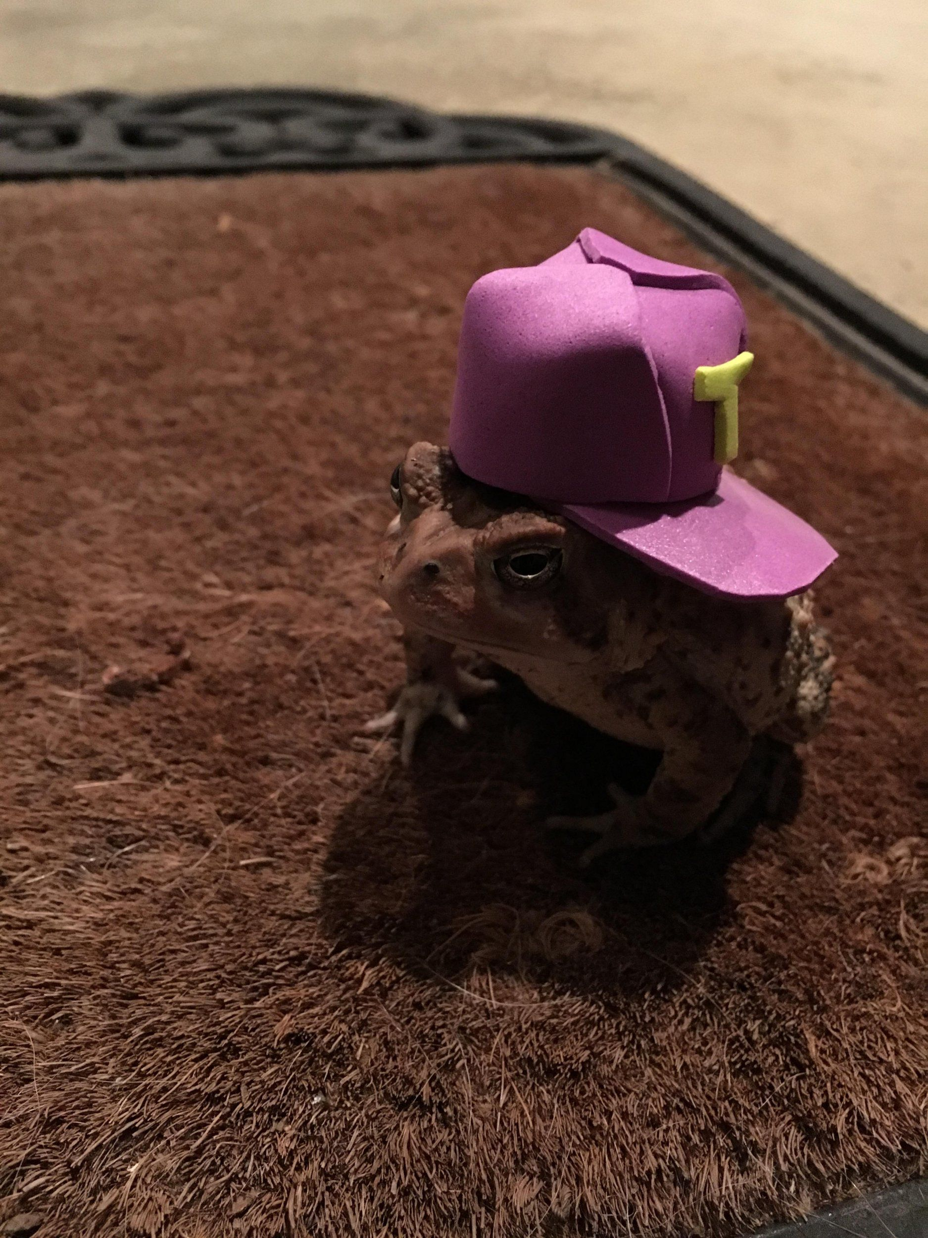 Man Made Amazing Tiny Toad Hats for Frequent Visitor _ baseball hat _ all created