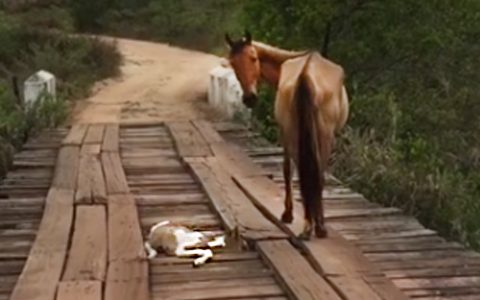 man rescues baby horse