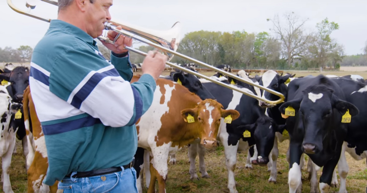 Dairy Farmer Performs Rgularly For His Jazz-Loving Cows _ everything inspirational