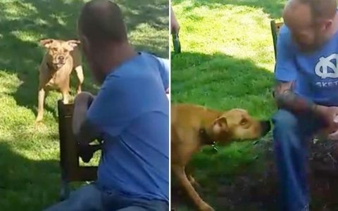 Hospitalized Man Not Recognized By His Own Dog _ Pup Sniffs him _ everything inspirational