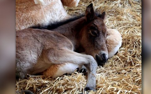 Abandoned Pony Was Sad Until Owners Gave Him A Friend _ Breeze and Buttons Bear _ everything inspirational