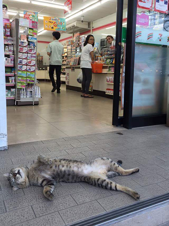 8 Perfectly Timed Over-exaggerated Cat Moments Will Make You Chuckle _ store fainting cat _ everything inspirational